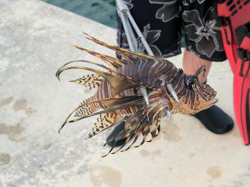 Closeup of Lionfish